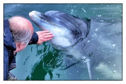 24.09.2012 Dusty, the bottlenose Dolphin.